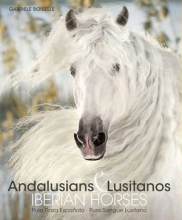 Andalusians and Lusitanos. Iberian horses